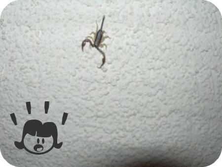 Dors avec les scorpions