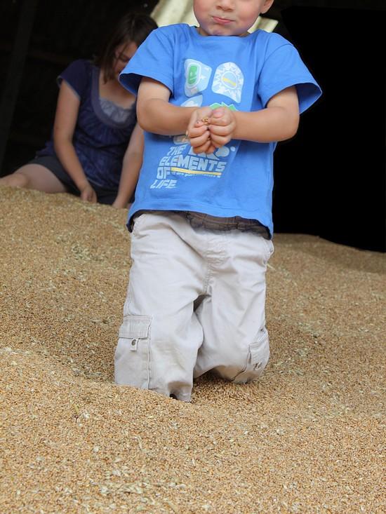 miniloup dans le grain