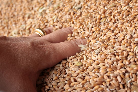 le bonheur de plonger sa main dans le grain