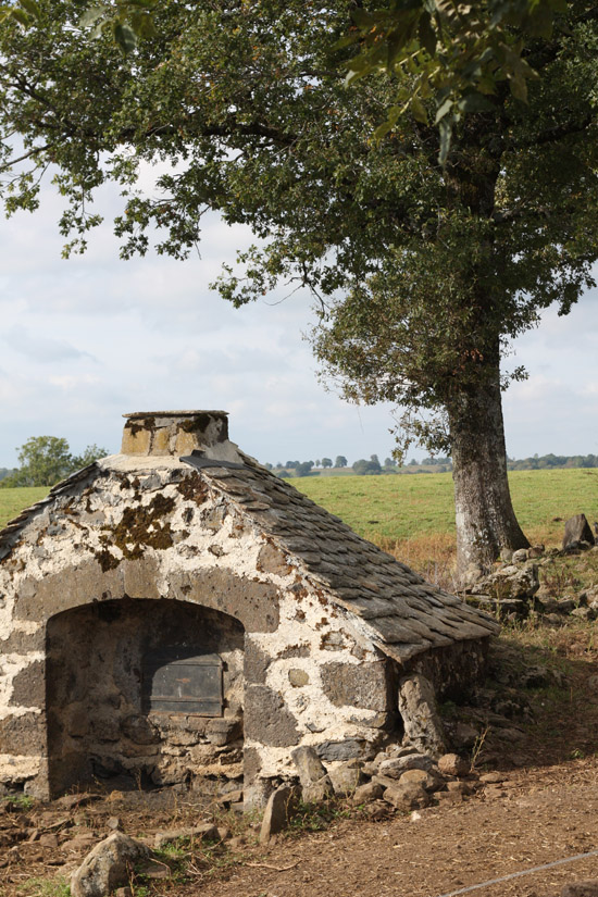 D U00e9couverte De L U0026 39  U00e9levage Bovin Dans Le Cantal