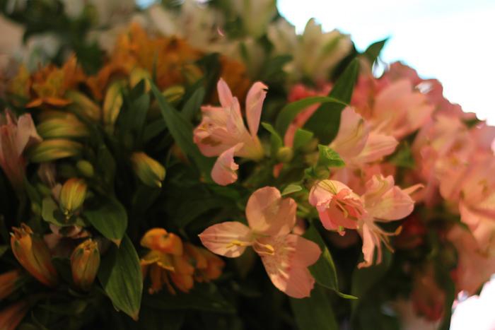 fleurspreferees04