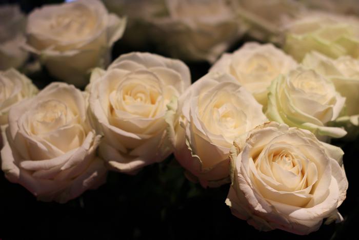 fleurspreferees05