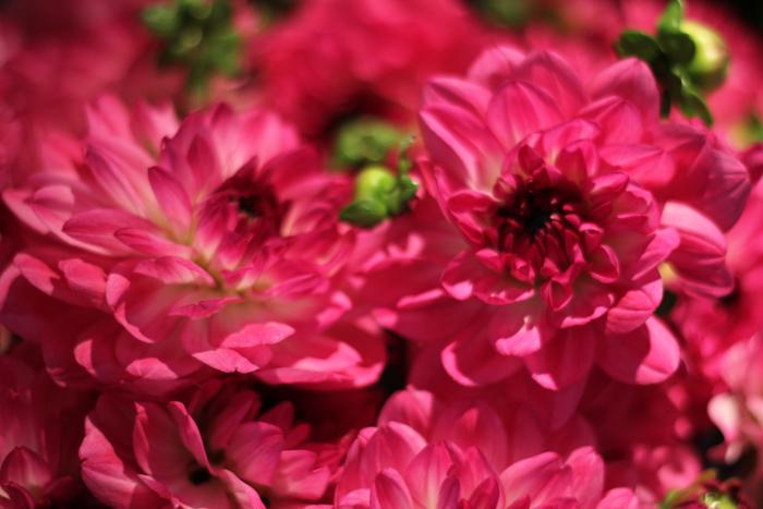 fleurspreferees06