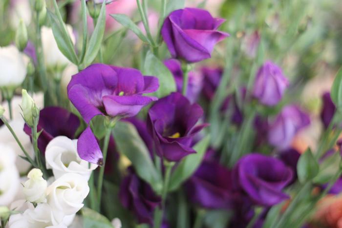fleurspreferees09
