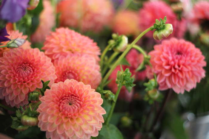 fleurspreferees10