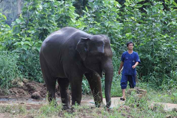 15_chiangsaenelephants01