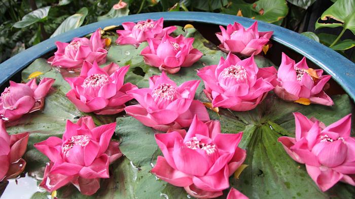 21_bangkokjimthompson02