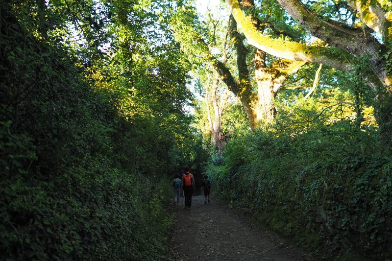 randonnée pédigolfe arradon 2015