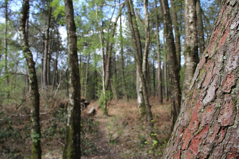 La forêt de Brocéliande (via wonderfulbreizh.fr)