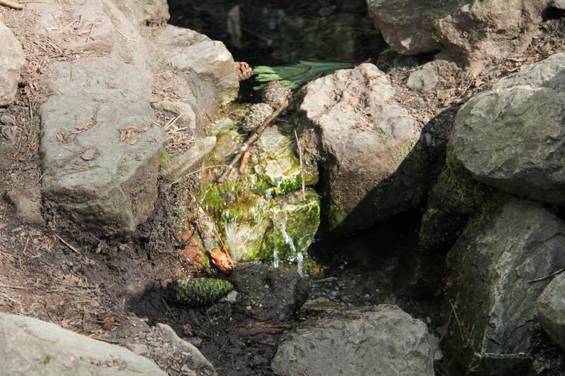 La Fontaine de Barenton, forêt de Brocéliande (via wonderfulbreizh.fr)