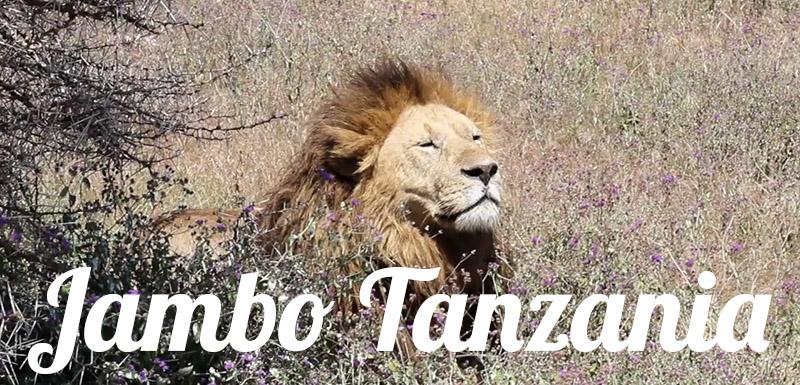 JamboTanzania800