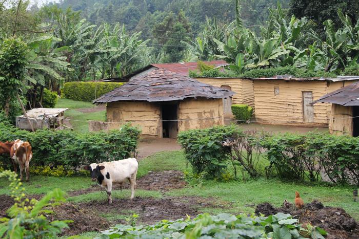 N'Giresi, Arusha, Tanzanie
