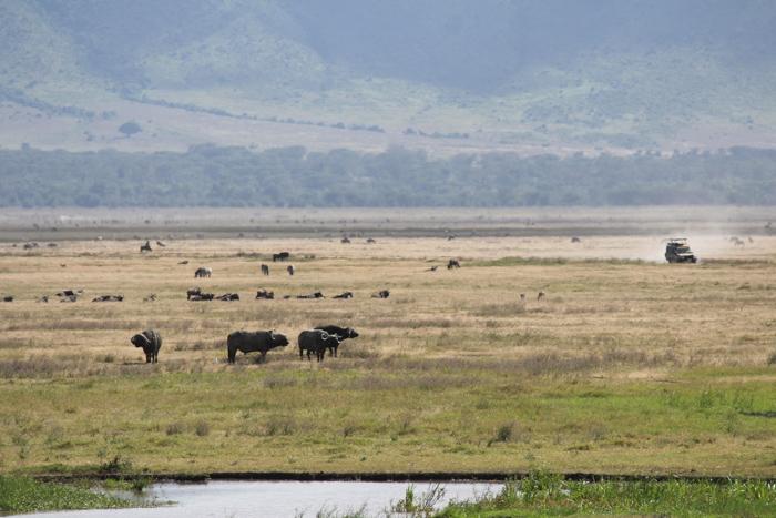 Safari cratère N'Gorongoro - Tanzanie