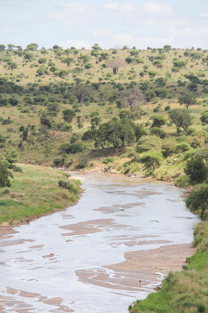 Safari Tarangire Tanzanie