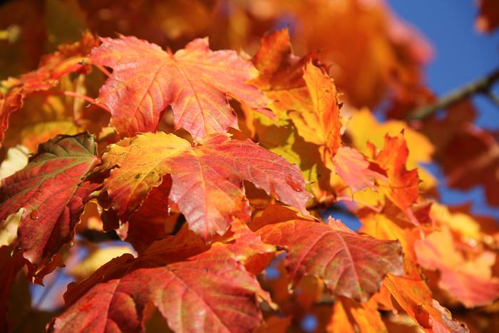 automne2016_02