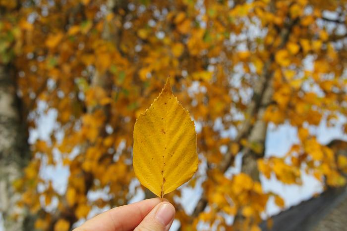 automne2016_08