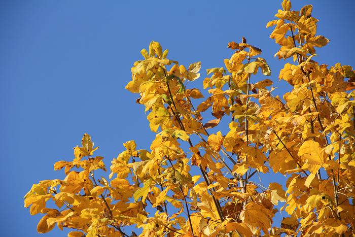 automne2016_09