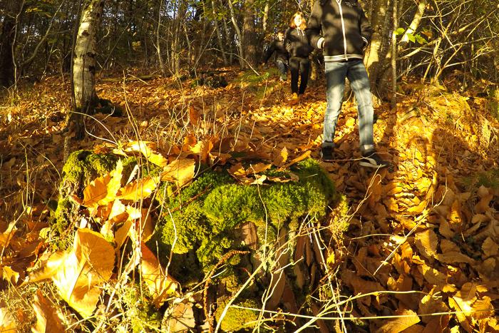 balade automne en forêt