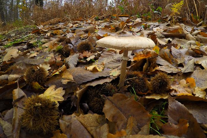champignonforetgopro_01