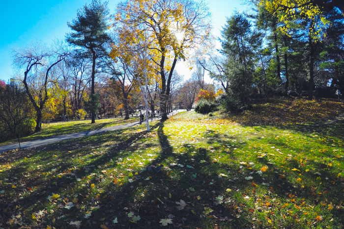 New York #DreamReal GoPro jour 2 Central Park