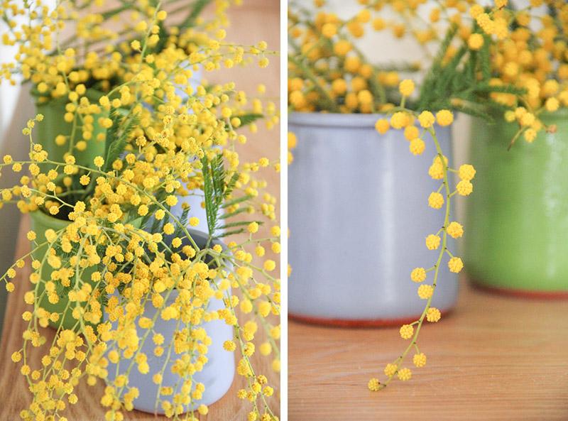 petits bouquets de mimosa
