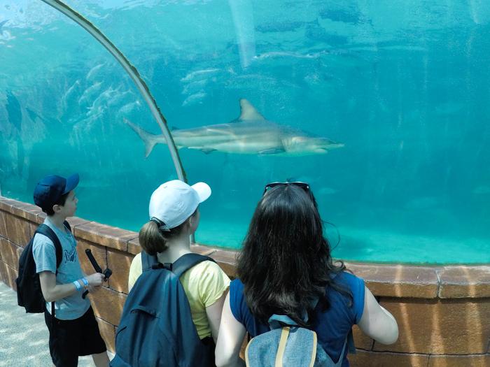 voyage Bahamas famille - Atlantis paradise island (via mercipourlechocolat.fr)