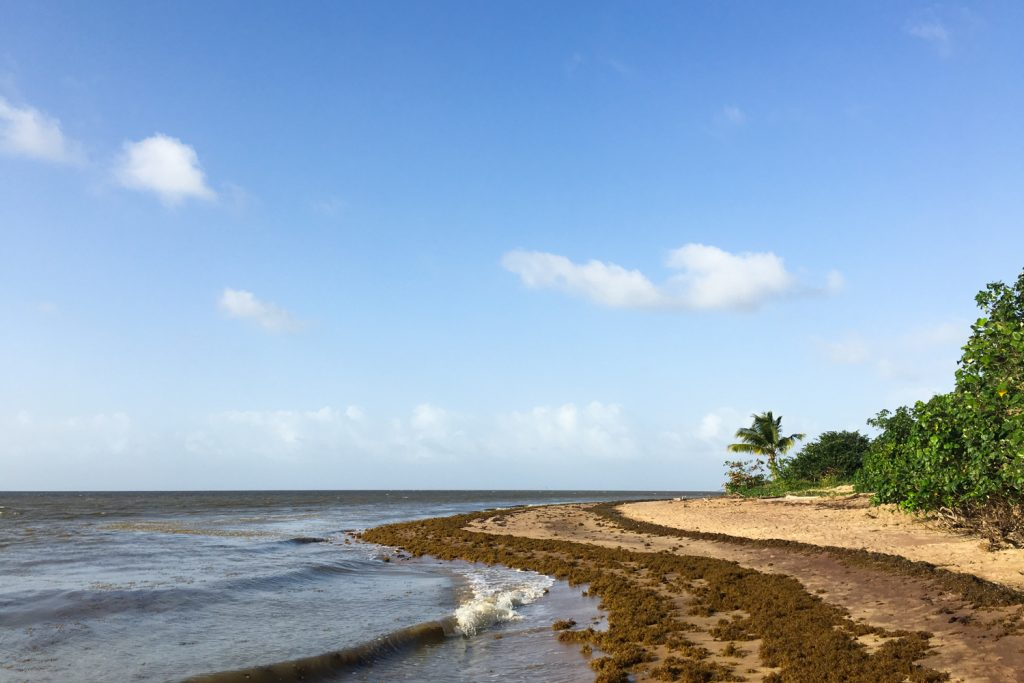 GUYANE - Awala-Yalimapo