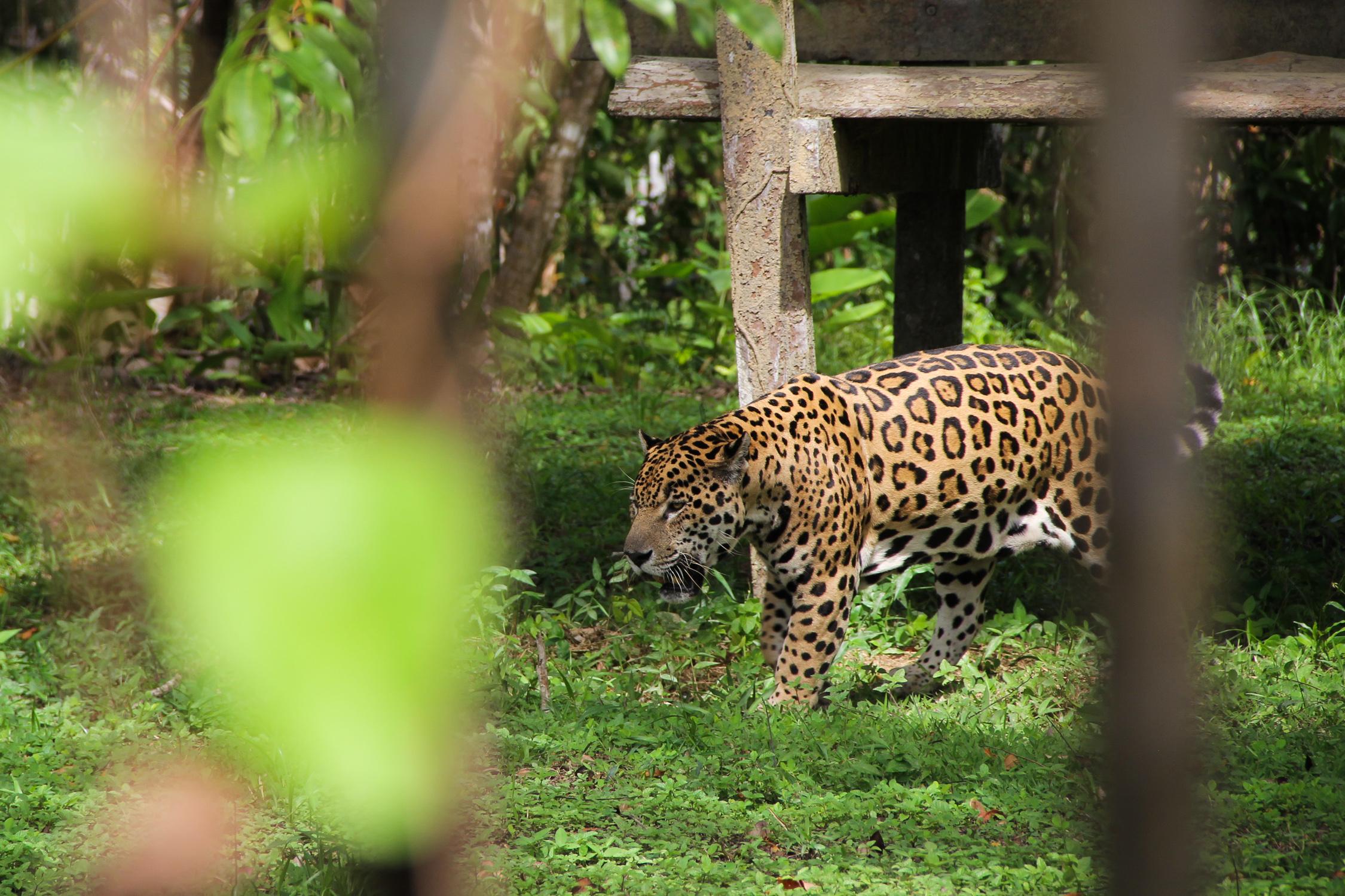 GUYANE - zoo de Guyane / Macouria
