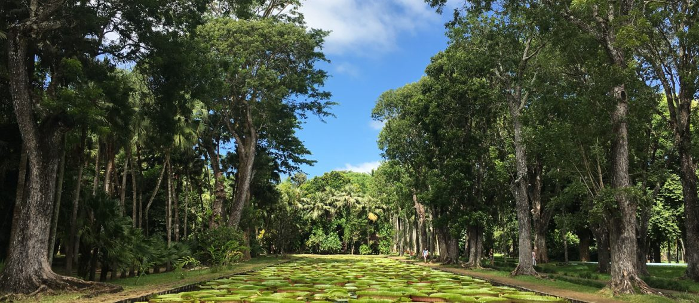 Île Maurice – le jardin de Pamplemousses