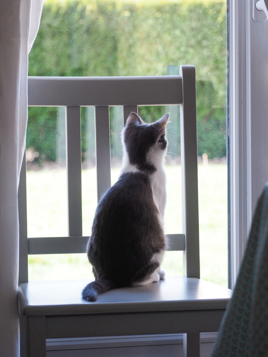 Mon Chat Dort Sur Mes Pieds 2 mois avec un chat ♥︎ | merci pour le chocolat !