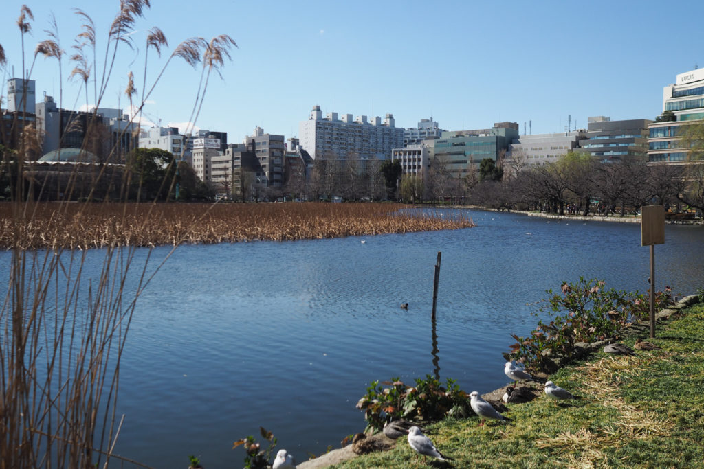 UENO PARK Tokyo (via mercipourlechocolat.fr)
